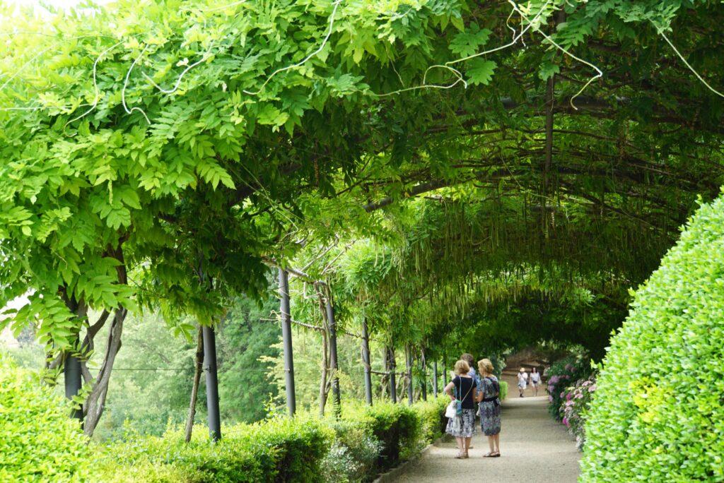 バルディーニ庭園 藤棚