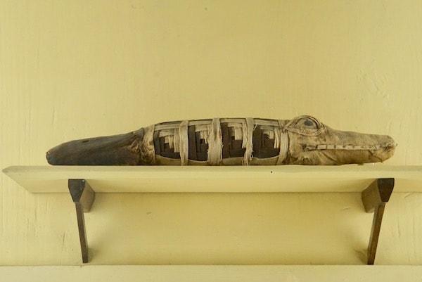 フィレンツェ考古学博物館 ワニの赤ちゃんのミイラ